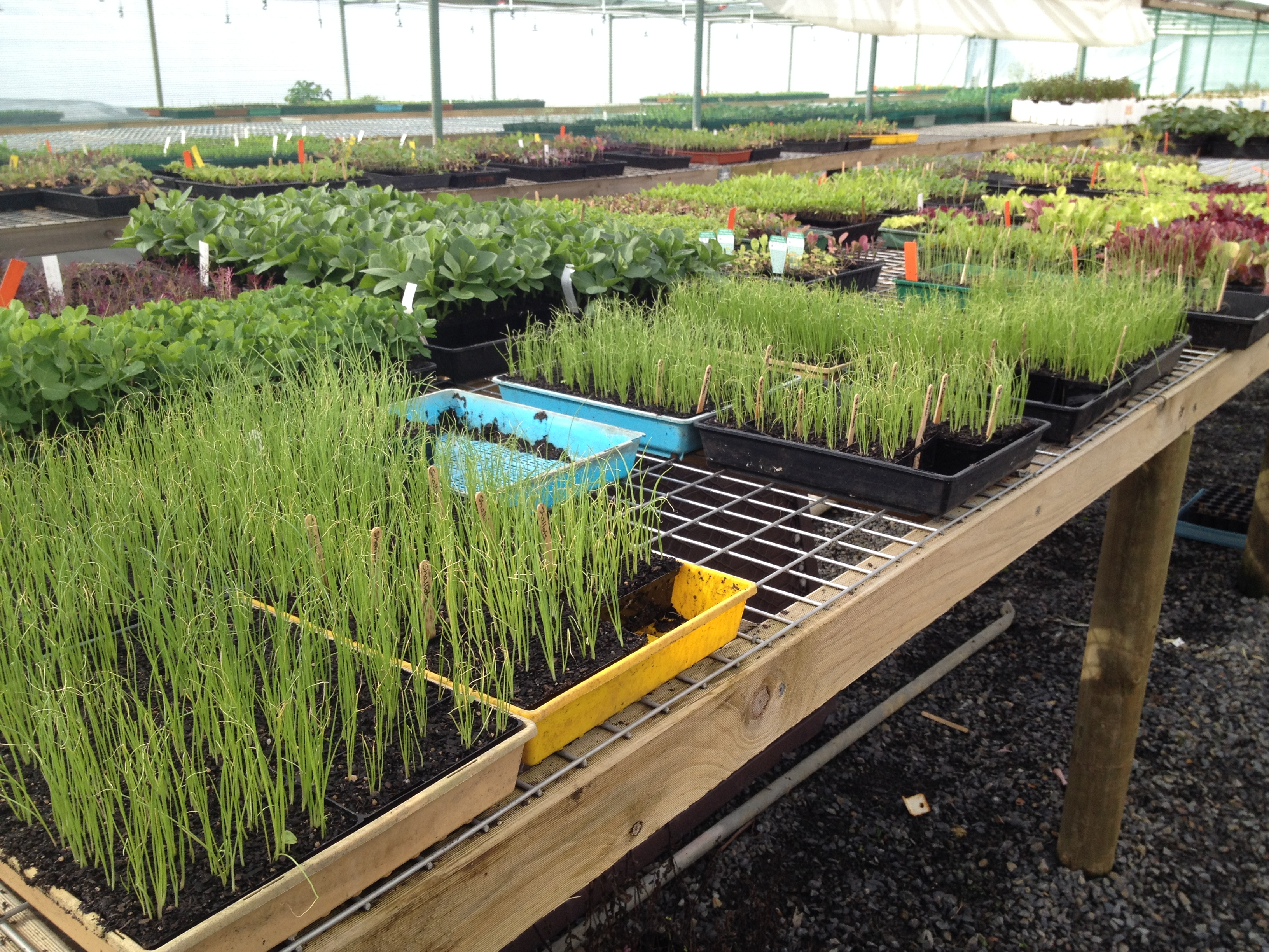 We Have Always Grown According To Organic Principles The Nursery Produces A Range Of Organically Vegetable Seedlings Herbs